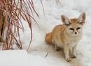 Zwierzęta w czasie zimy