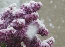 Śnieżna majówka
