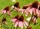 Ogród botaniczny u kresu lata