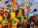 Jesień w miejskich parkach