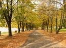 Jesień w parkach