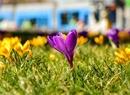 Pierwszy powiew wiosny