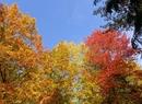 Kolorowe oblicze października