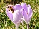 Kwiecień na łonie natury